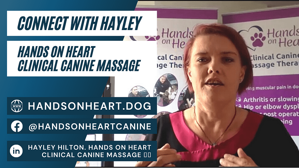 Contact Hayley Hilton Hands On Heart Canine Massage Interview